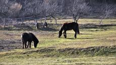 Kone nad Ottergrundom - Banská Štiavnica