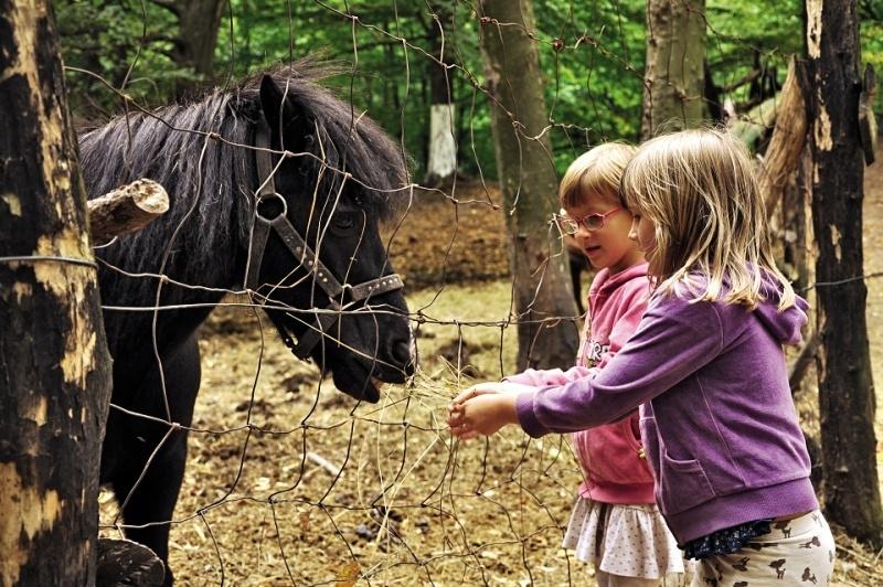 Pocuvadlo - zoo - deti - Banska Stiavnica © A.Niznanska DSC_0137_